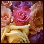Roses from a dear friend