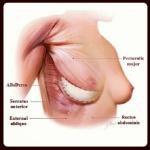 Pectoralis major, serratus anterior